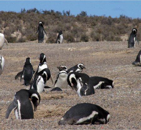 Excursiones y viajes en Argentina | Actividades cerca | Viaja por tu país.